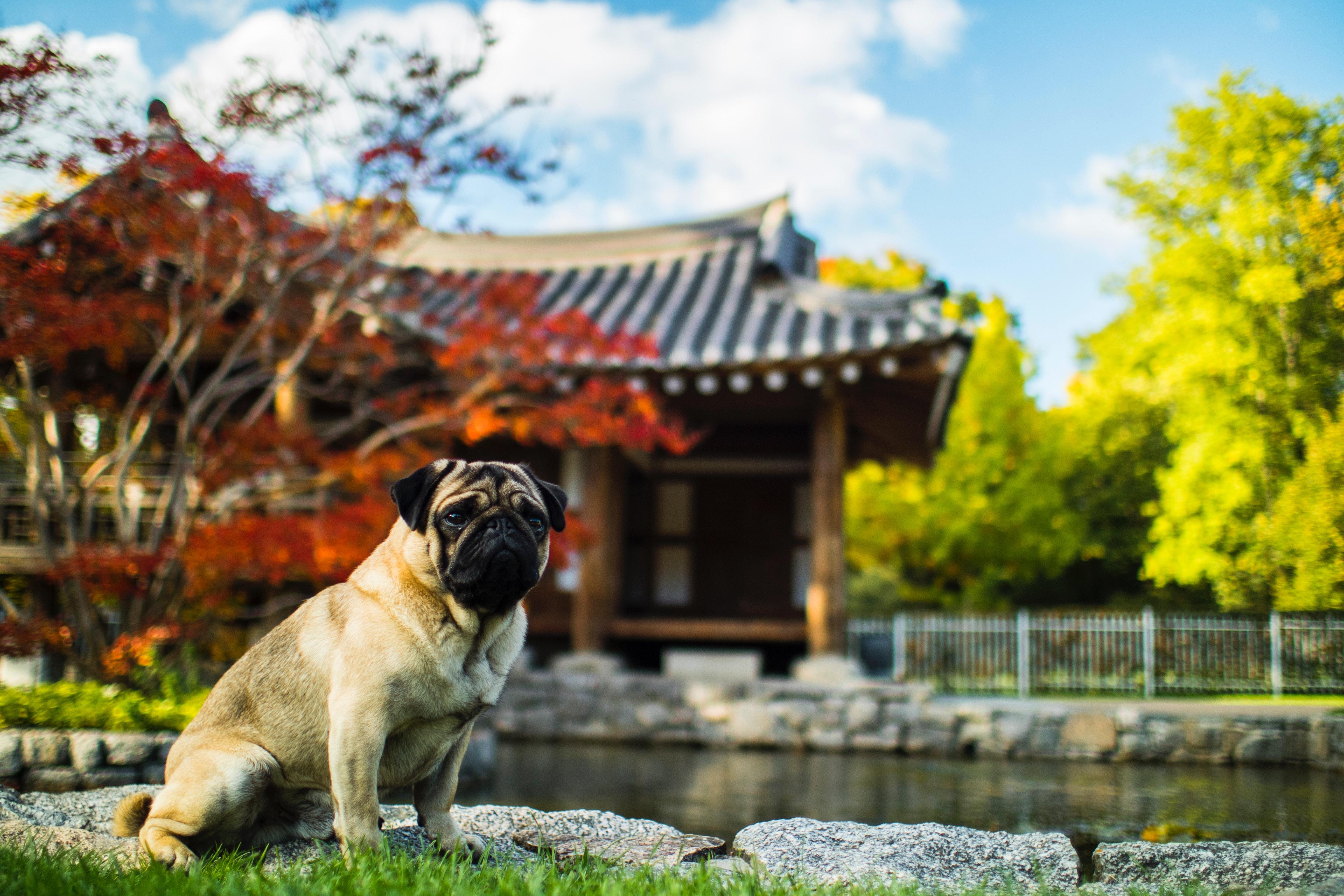 adorable-architecture-asian-316776