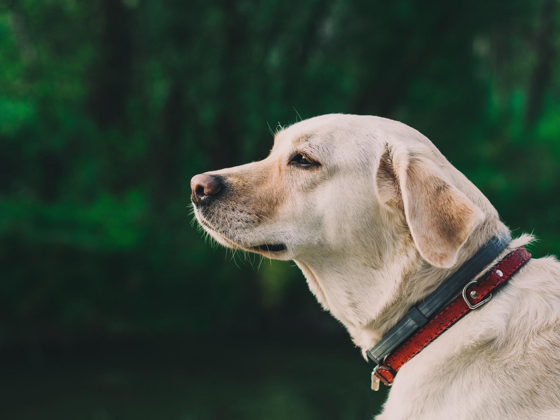 nature-animal-dog-pet
